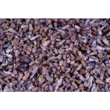 국내산 먹꼴뚜기(소) 2030-750